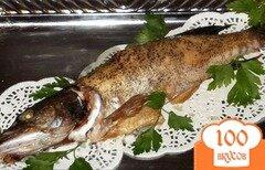 Фото рецепта: «Щука, запеченная в духовке целиком»