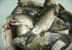 «Рыбный пирог» - приготовления блюда - шаг 2