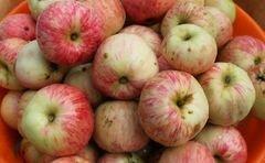 «Яблочный кисель» - приготовления блюда - шаг 1