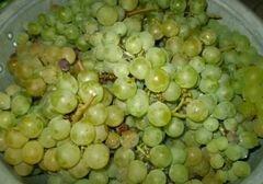 «Натуральный виноградный сок из соковарки» - приготовления блюда - шаг 1